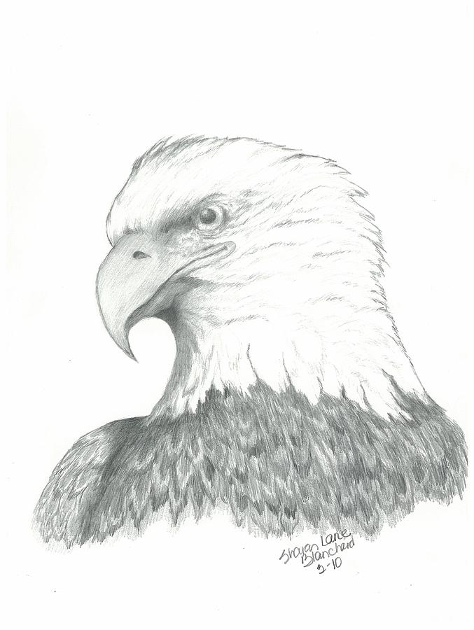 Eagle Symbol Of Freedom Drawing By Sharon Blanchard