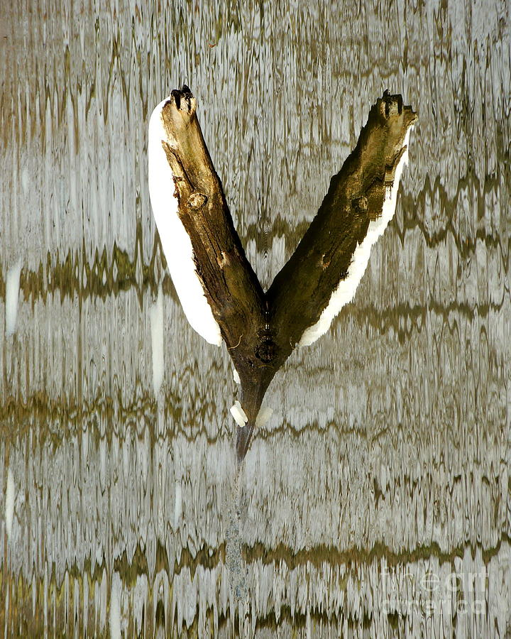 Abstract Photograph - Eagle Wings by Marcia Lee Jones