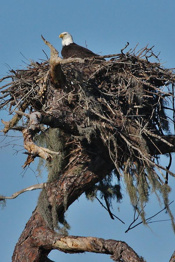 Eagles Nest Photograph by Gary Ezell