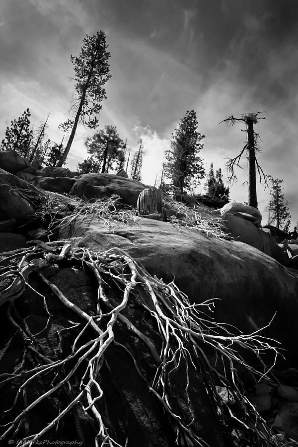 Eagle's Nest by Mark Robert Bein