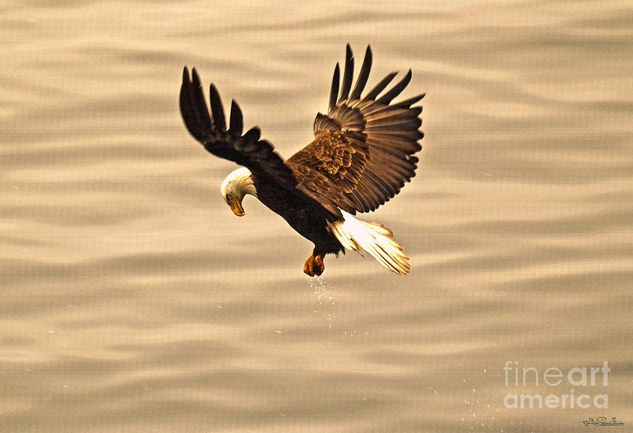 Eagle Photograph - Eagles Pause by Skye Ryan-Evans