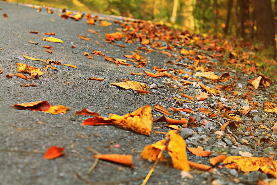 Autumn Photograph - Early Autumn Road by Candice Trimble