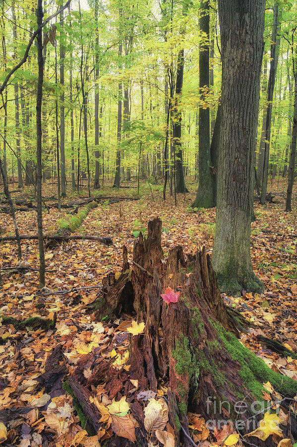 Michele Photograph - Early Autumn Woods by Michele Steffey