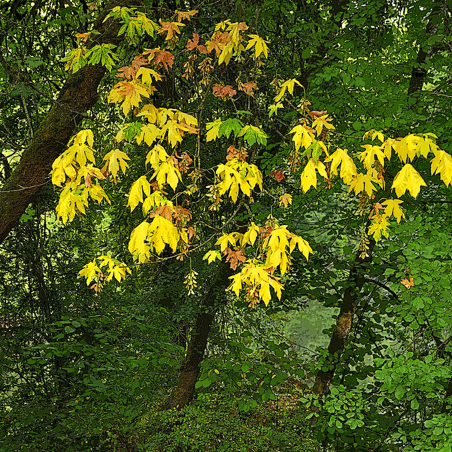 Early Fall Color 26311 Pe Photograph