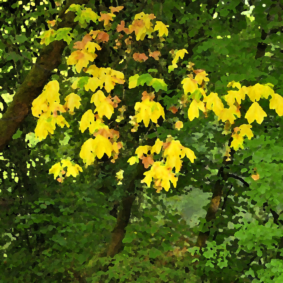 Early Fall Color 26311 Pknife Photograph