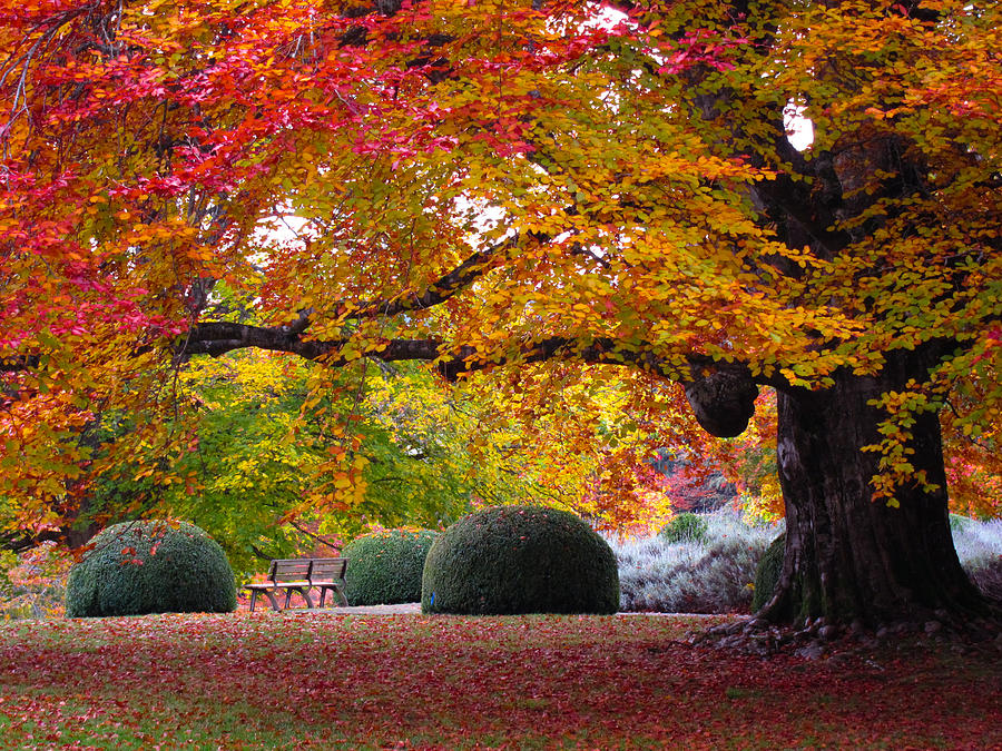 Early Fall Colors Photograph By Johan Deboer