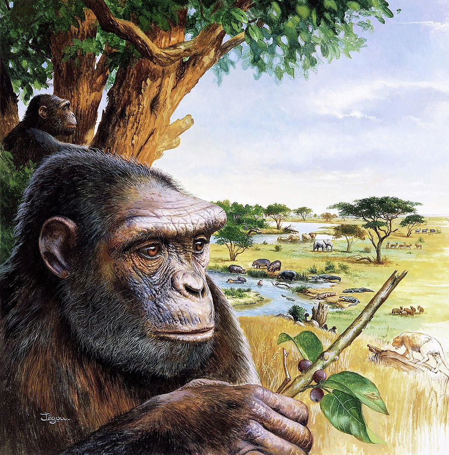 Toumai Photograph - Early Hominid by Christian Jegou Publiphoto Diffusion/ Science Photo Library