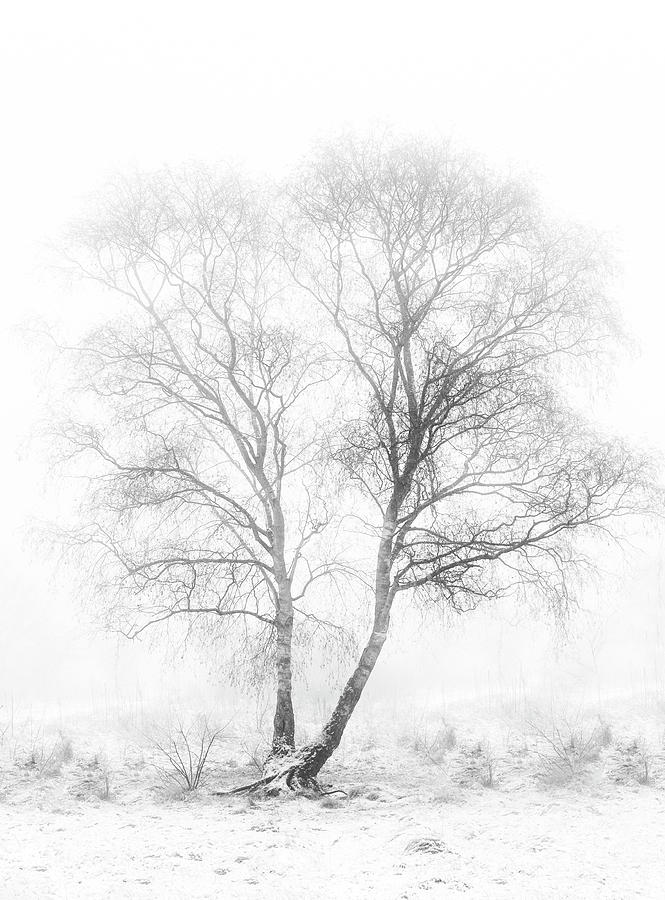 Landscape Photograph - Early In The Morning by Greetje Van Son