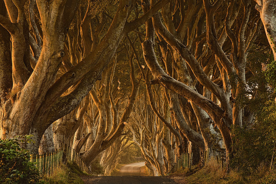 Dark Photograph - Early Morning Dark Hedges by Derek Smyth