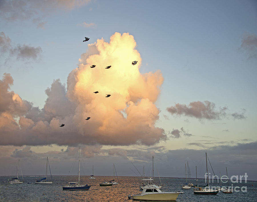 Early Morning Flight by Joan McArthur