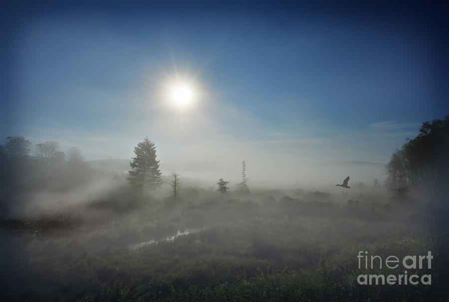 Morning Photograph - Early Morning Fog At Canaan Valley by Dan Friend