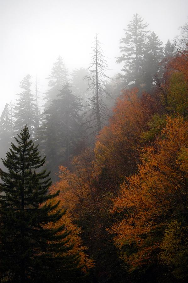 Early Morning Fog Photograph - Early Morning Fog Smoky Mountains by John Saunders