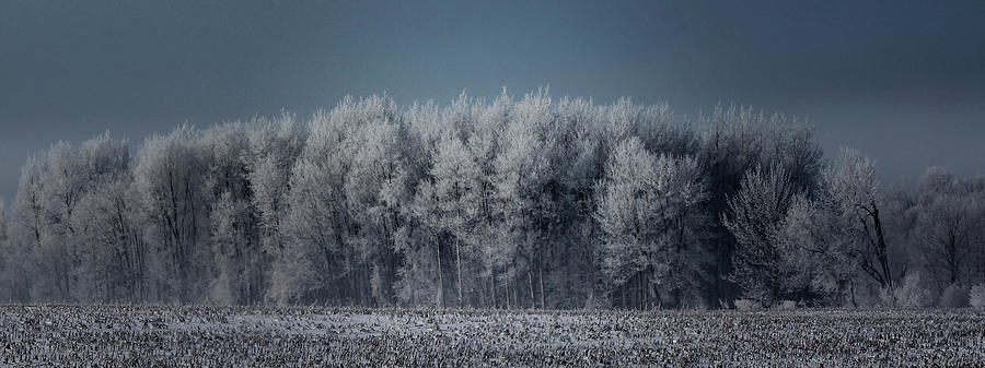 Landscape Photograph - Early Morning Frost by Sarah Boyd