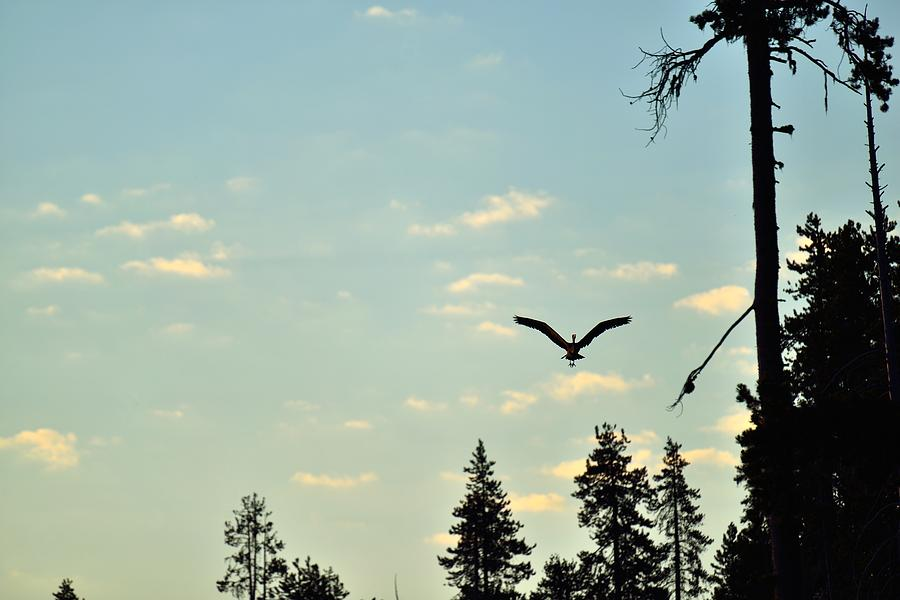 Heron Photograph - Early Morning Heron In Silhouette by Rich Rauenzahn
