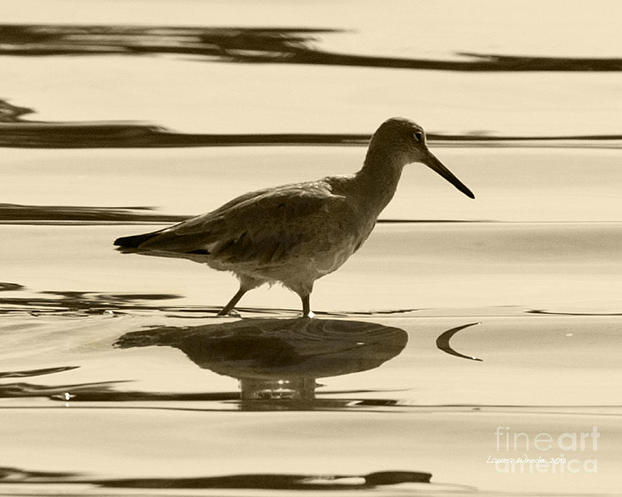 Gaviota Photograph - Early Morning In The Moss Landing Harbor Picture Of A Willet by Artist and Photographer Laura Wrede