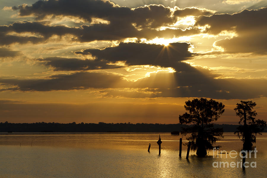 Cypress Trees Photograph - Early Morning Light At Lake Deutrive by Kelly Morvant