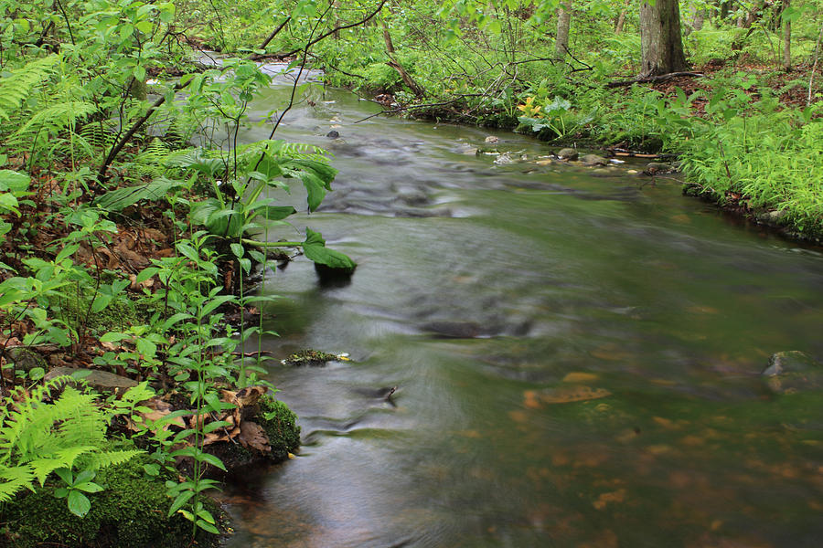 Woodland Photograph - Early Summer At Borden Brook by Andrew Pacheco