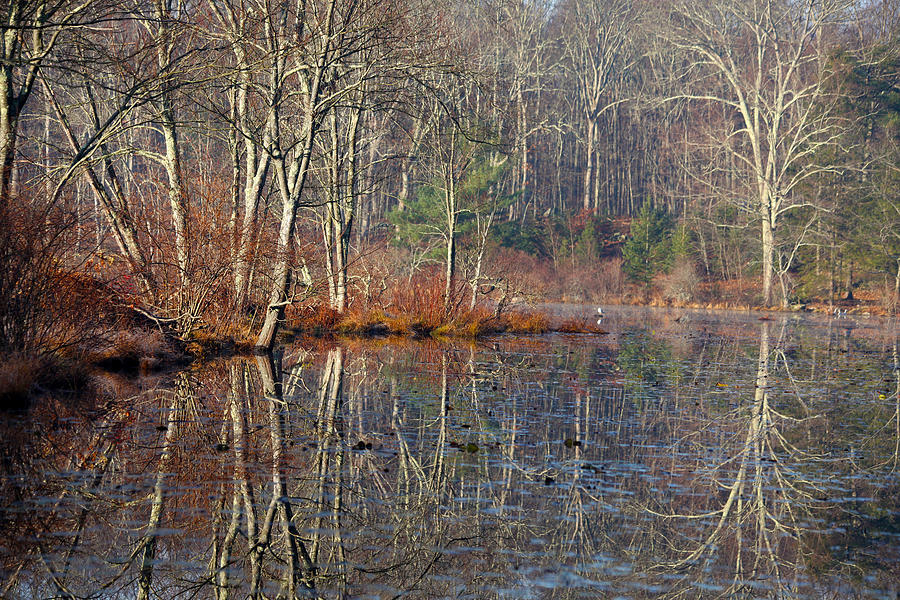 Winter Photograph - Early Winter Reflects by Karol Livote