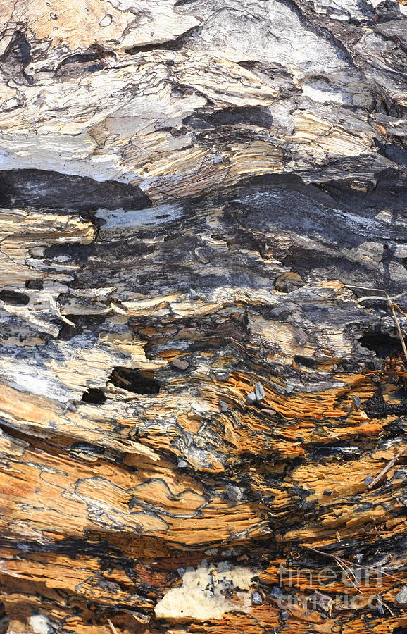 Abstract Photograph - Earth And Sky by Marcia Lee Jones