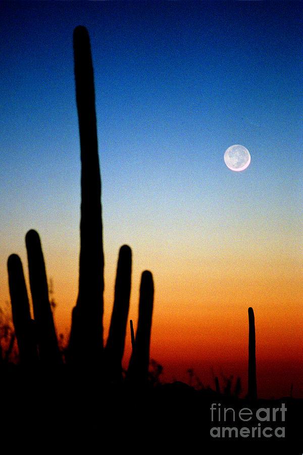 Earthshine Photograph - Earthshine by Douglas Taylor