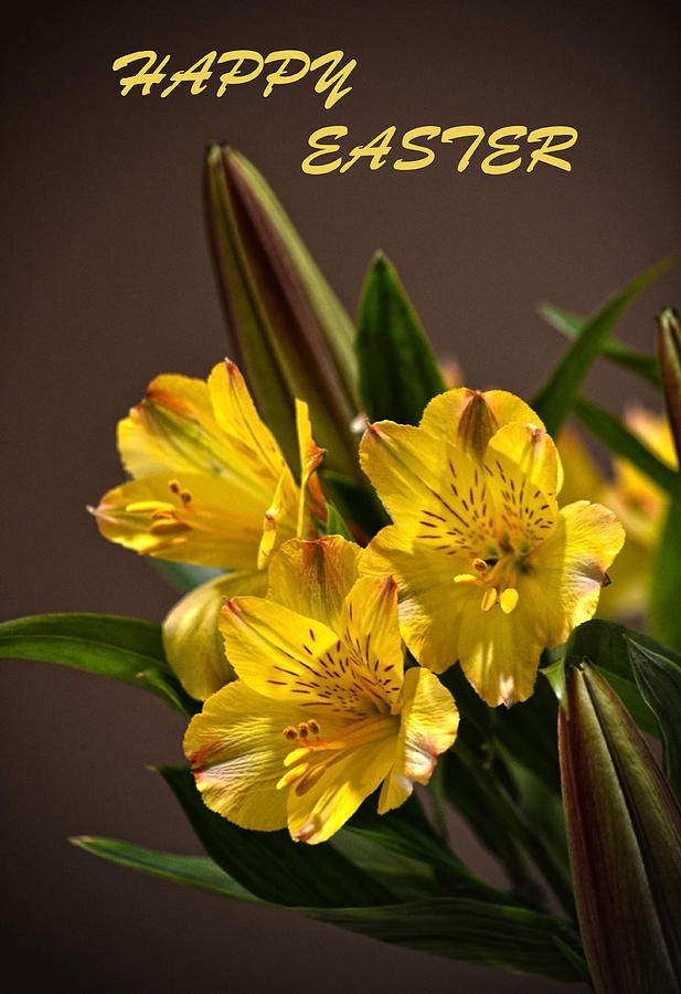 Peruvian Lily Photograph - Easter Lilies by Sandi OReilly