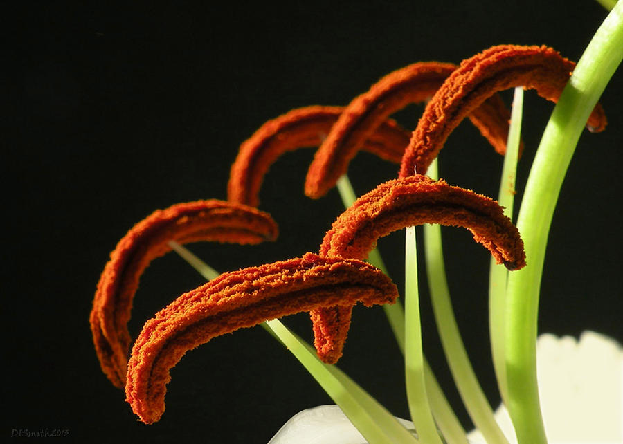 Floral Photograph - Easter Lily Detail by Deborah Smith