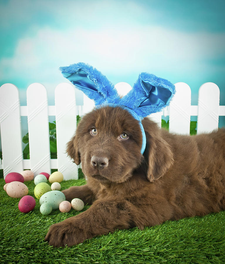 Easter Puppy Photograph by Stockimage