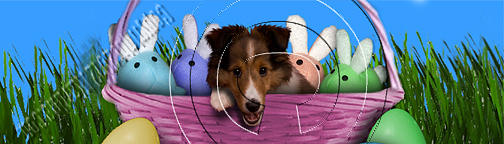 Bookmark Photograph - Easter Sheltie # 461 by Jeanette K
