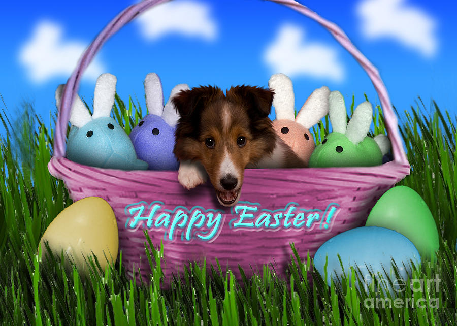 Animal Photograph - Easter Sheltie Puppy by Jeanette K