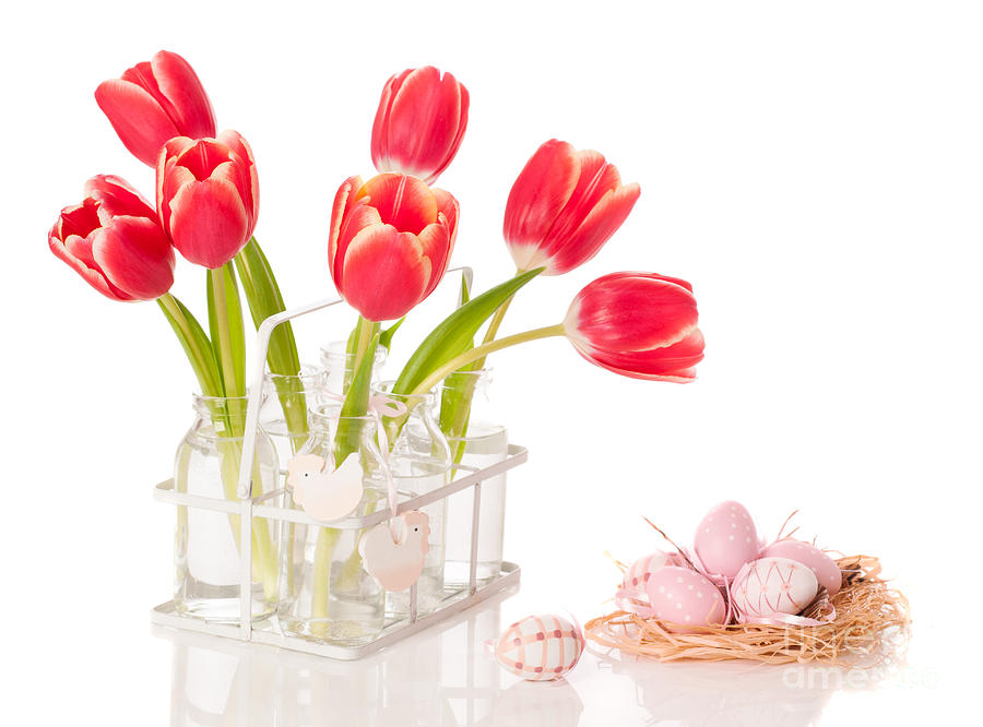Spring Photograph - Easter Tulips by Amanda Elwell