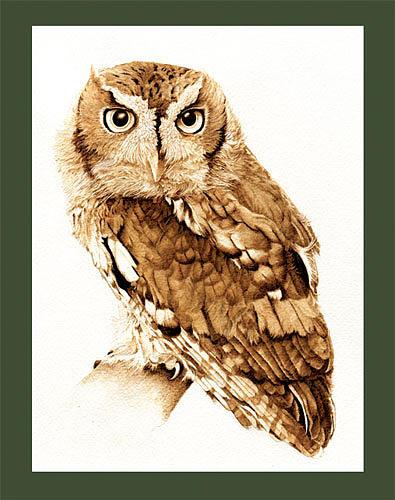 Owl Drawing - Eastern Screech Owl by Cate McCauley