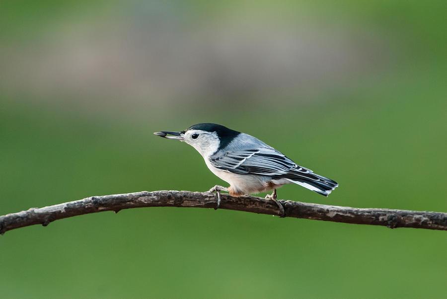 Bird Photograph - Eating Like A Bird by Paul Johnson