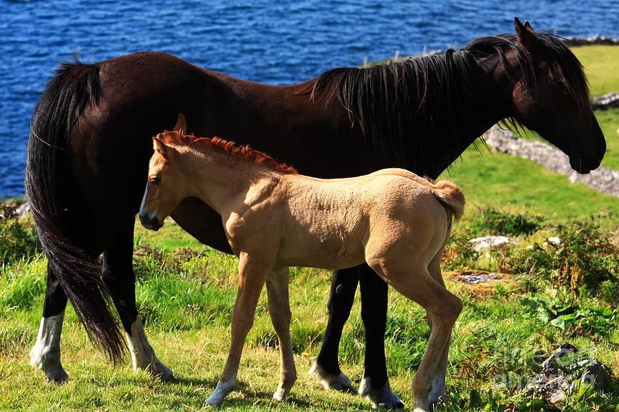 Horse Photograph - Ebony And Ivory by Aidan Moran