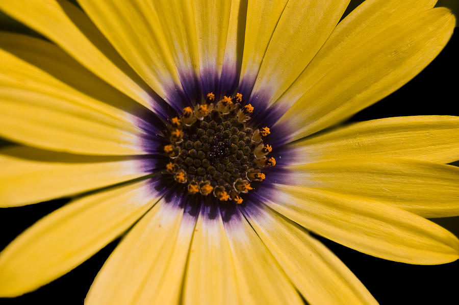 Yellow Photograph - Ebullient by Cara Moulds
