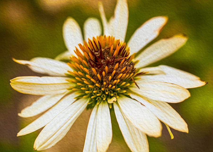 North Cascades Painting - Echinacea Fading Beauty by Omaste Witkowski