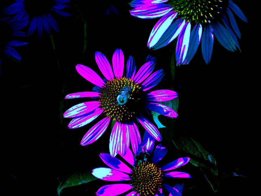 Psychedelic Digital Art - Echinacea Hot Blue by Karla Ricker