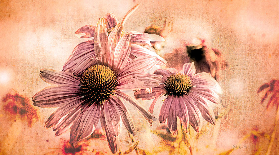 Flower Photograph - Echinacea Impressions  by Bob Orsillo