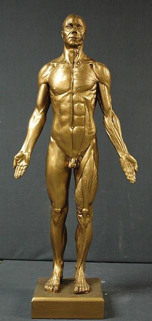 Anatomy Sculpture - Ecorche by Gary Wind