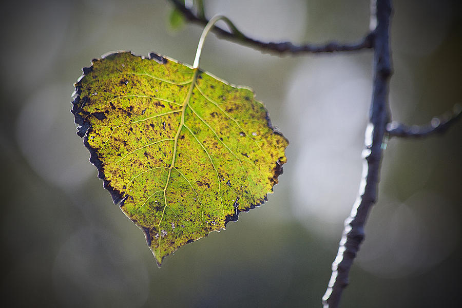 Fall Photograph - Edge Of Change by Karol Livote