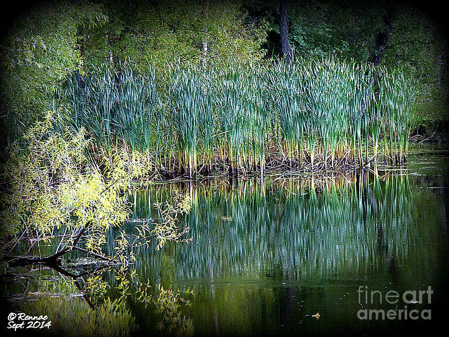 Landscape Photograph - Edge Of Reflections by Rennae Christman