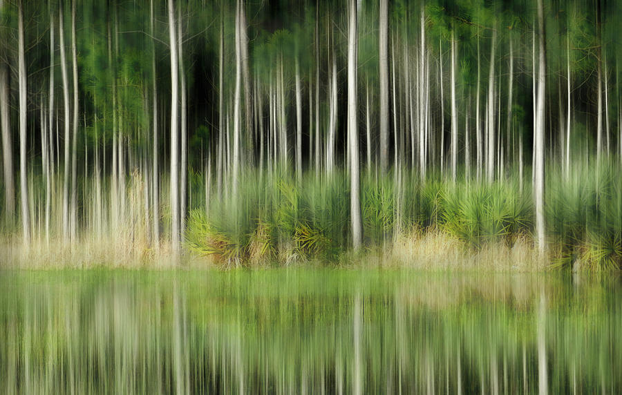 Edge Of The Forest Photograph