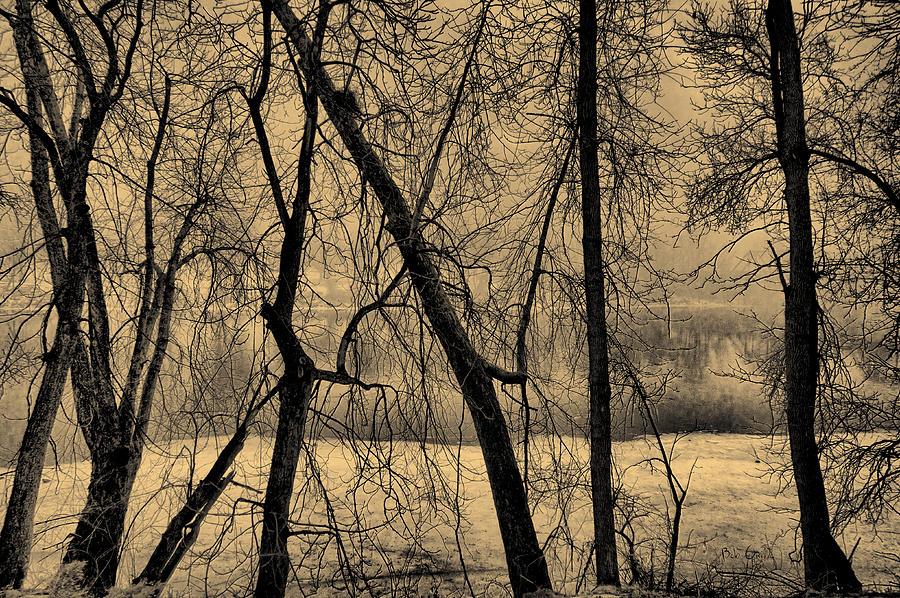 Tree Photograph - Edge Of Winter by Bob Orsillo