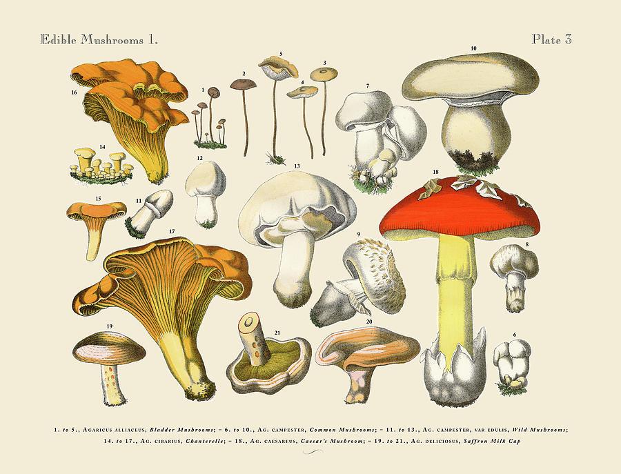 Edible Mushrooms, Victorian Botanical Digital Art by Bauhaus1000
