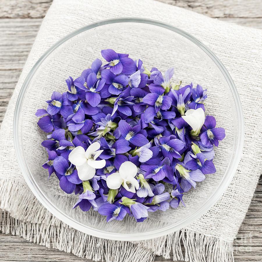 Edible Violets Photograph By Elena Elisseeva