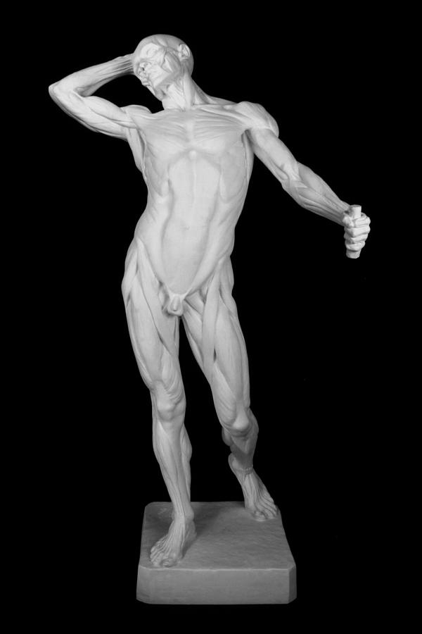 Edouard Lanteri Anatomy 1 Sculpture by Andrea Felice