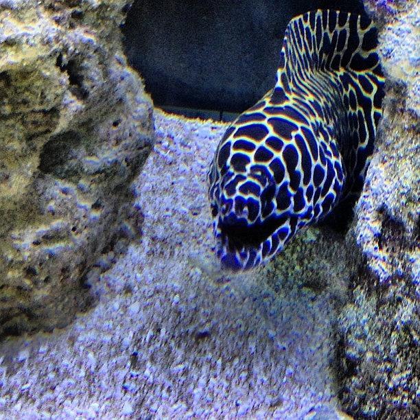 Underwater Photograph - #eel #saltwater #underwater #water by Amber Campanaro