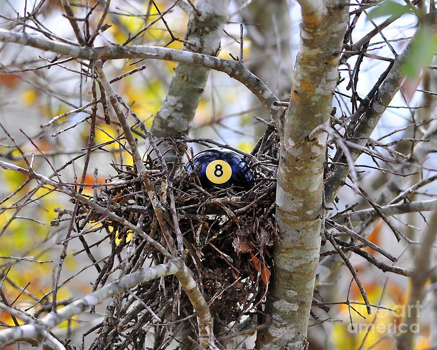 Bird Nest Photograph - Eggstraordinary by Al Powell Photography USA