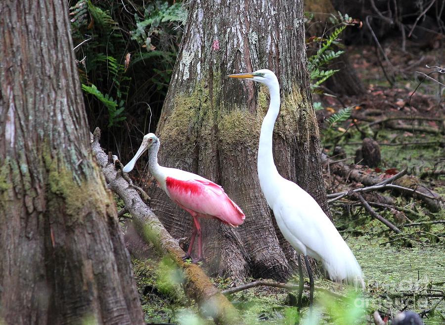 Roseate Spoonbill Photograph - Egret And Spoonbill by Theresa Willingham