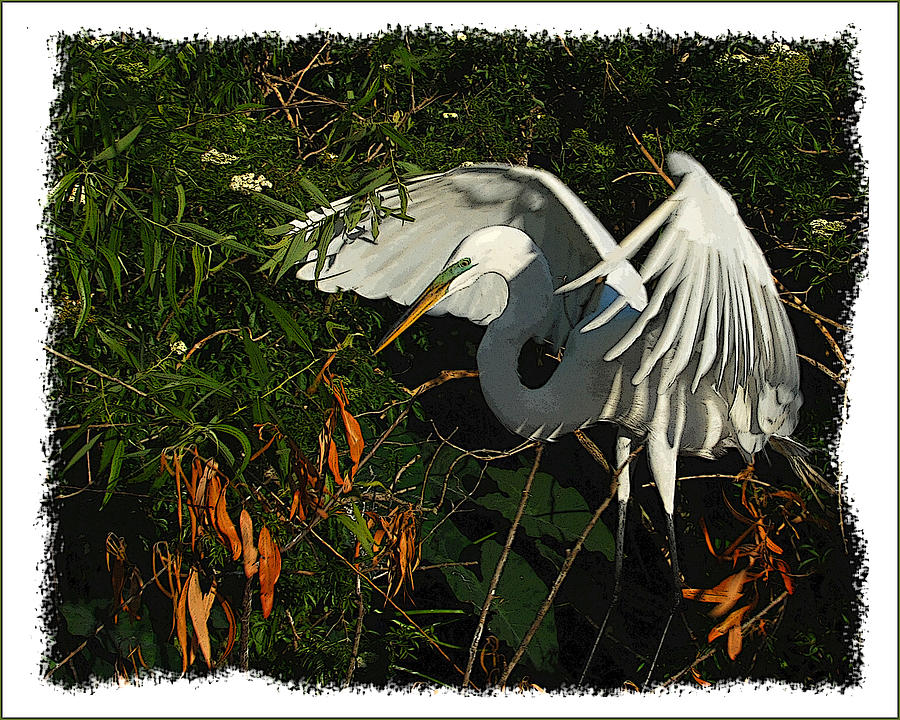 Bird Photograph - Egret Beauty by Wynn Davis-Shanks