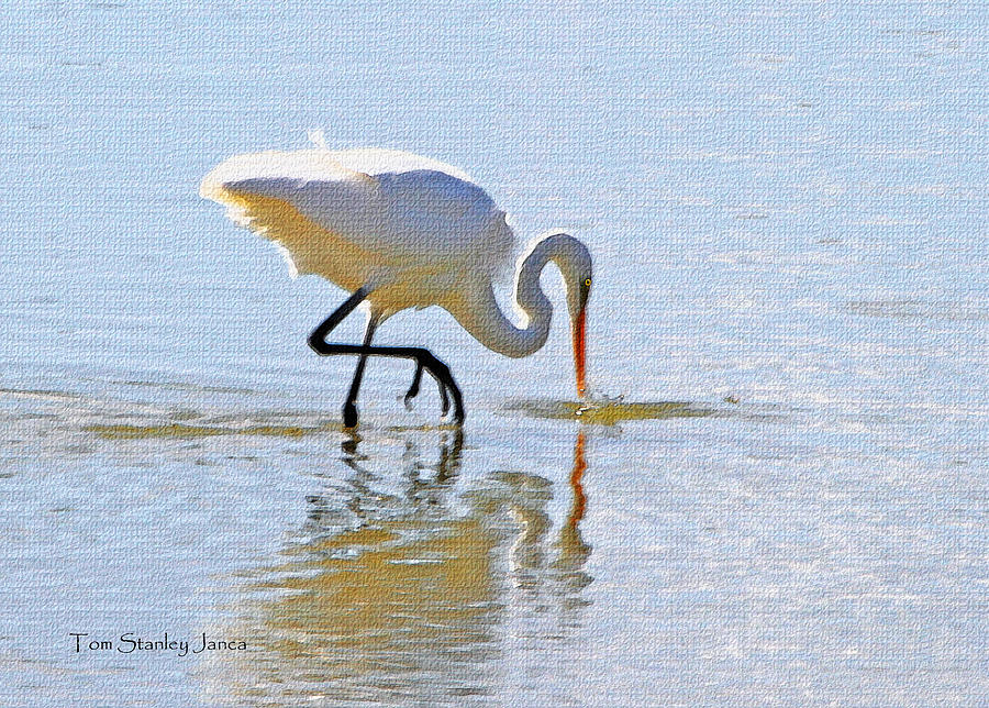 Grp Photograph - Egret Catches A Fish by Tom Janca